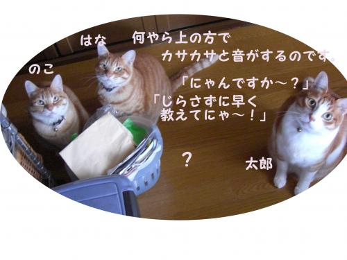 CIMG1742_convert_20100407201737.jpg
