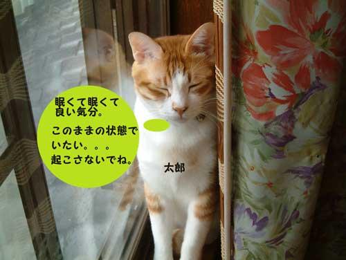 CIMG1774_20100516210512.jpg