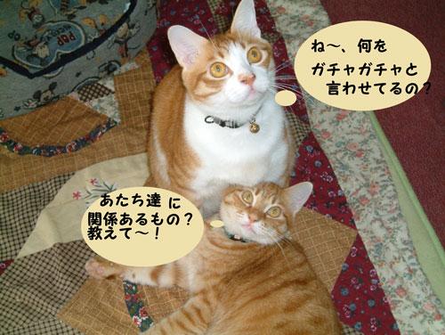 CIMG1833_20100501224938.jpg