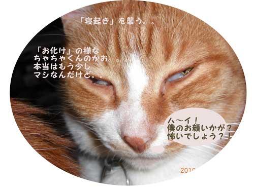 CIMG1836_20100504233611.jpg