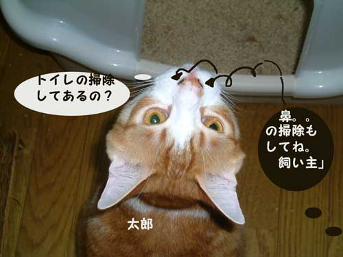 CIMG1894_20100520230926.jpg