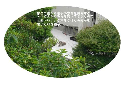 CIMG20213.jpg