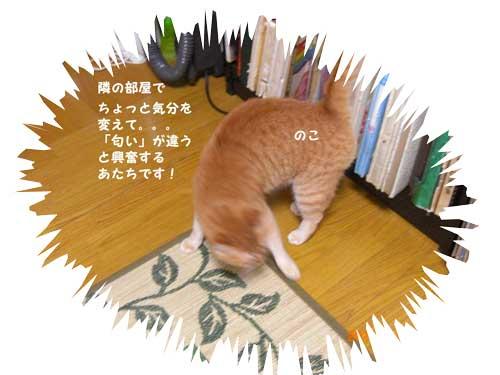 CIMG2087.jpg