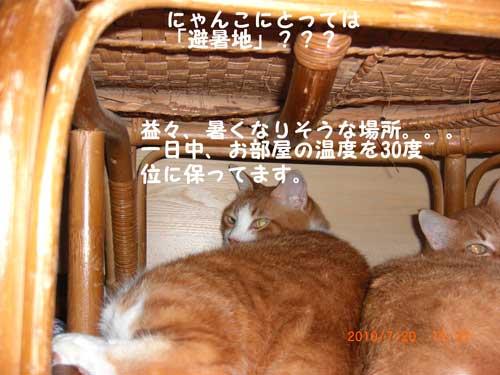 CIMG2157.jpg