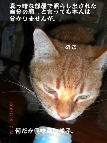 CIMG215_20100726220224.jpg
