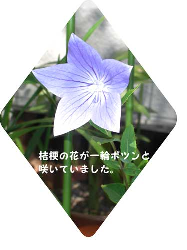 CIMG2166.jpg