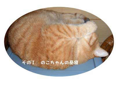 CIMG2207.jpg