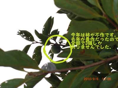 CIMG2304_20101003102458.jpg