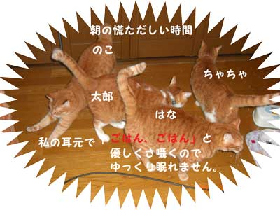 CIMG2304_20101005223503.jpg
