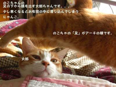 CIMG2386_20101105135357.jpg