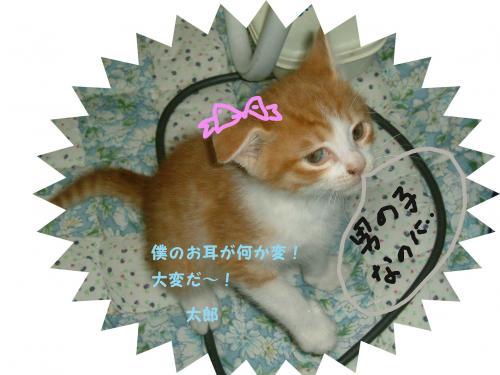 DSCF0102_convert_20100226223728.jpg