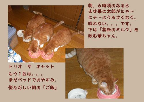 ishokuji1.jpg