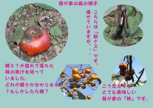 shuukaku2.jpg