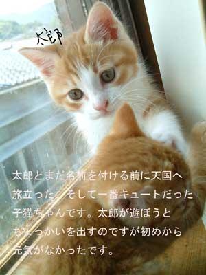 taroufuuka.jpg