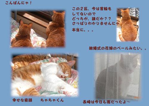ushiro1.jpg