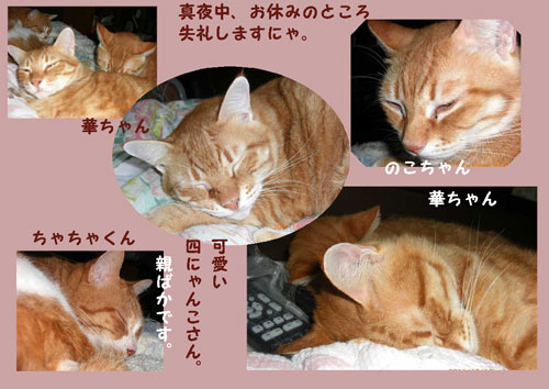 yonaka1.jpg