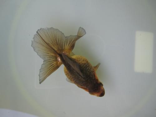 7月分譲魚-1