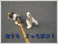 お散歩・8