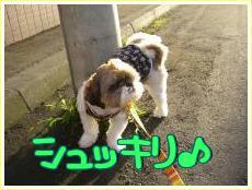 お散歩・6