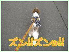 お散歩・5