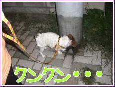お散歩!3