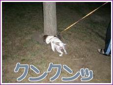 お散歩!4