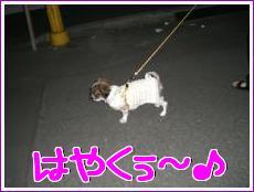 お散歩!2