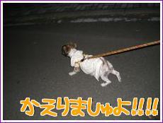 お散歩!6