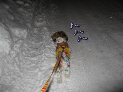 思いがけない夜のお散歩!6