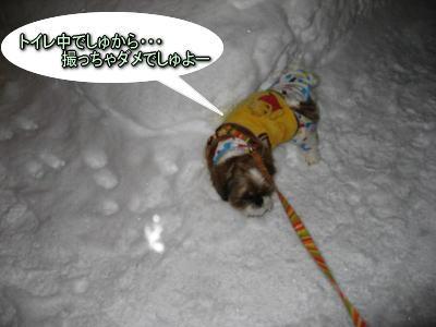 思いがけない夜のお散歩!5