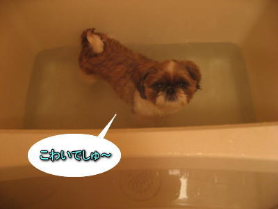 10・1・30お風呂3