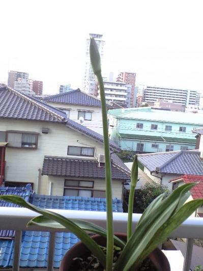 CA390173shiroama.jpg