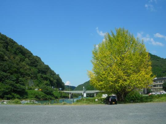 sakunado007.jpg