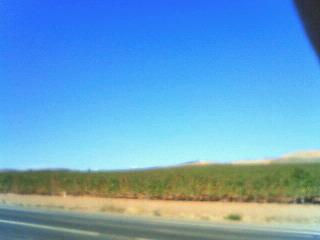 リオハぶどう畑