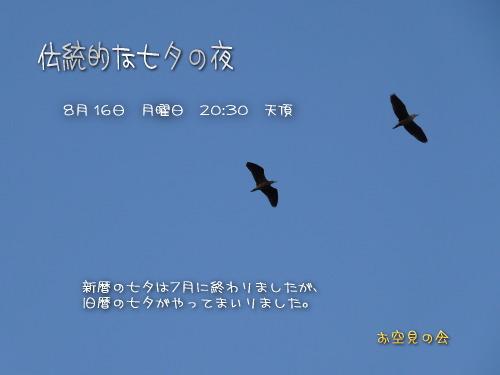 2010 8 16 伝統的な七夕