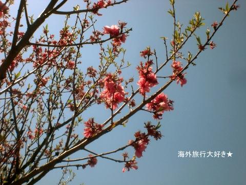 CIMG9831.jpg