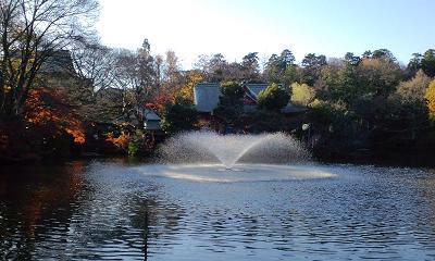 井の頭公園紅葉5