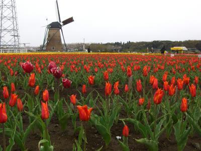 Tulip Fair4