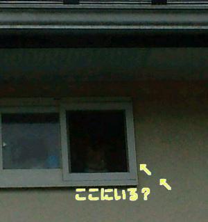 いとしの小窓?