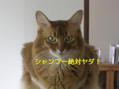 2010110704.jpg