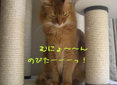 2010110903.jpg