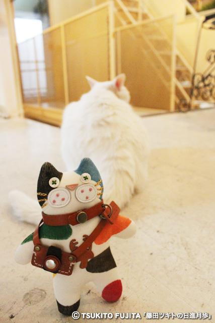 SHIKAZO_IMG_7797.jpg