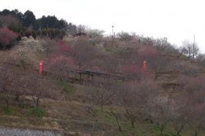 津山市神代梅の里公園梅開花状況(平成23年3月18日現在)