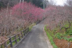 津山市神代梅の里公園(H23.3.1)