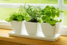 植物窓辺Fotolia_XS