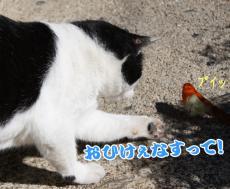 2009_10_11_.jpg