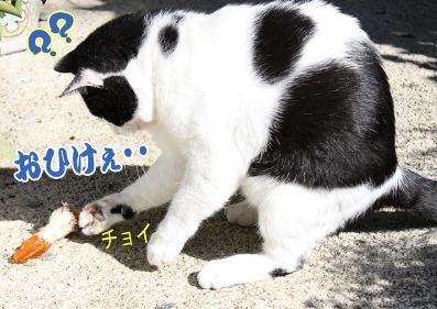 2009_10_11h.jpg