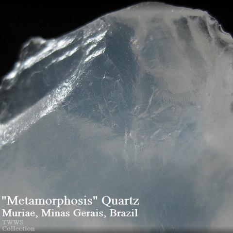 メタモ_ブラジル1