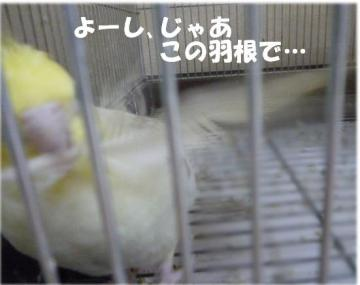 P1040277拡大
