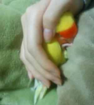 赤ちゃん寝②